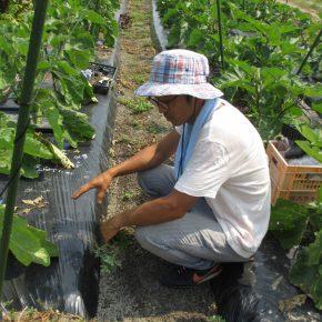 ウエンダ・アラヤファームとはまさき農園見学報告