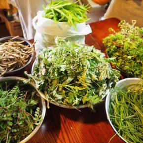 春の野草料理教室