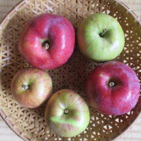 町田さんのりんごの季節になりました。